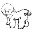 decorative standing portrait of dog bichon frise vector image vector image