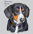 entlebucher mountain dog colorful hand drawing vector image vector image