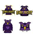 owl logo team mascot vector image vector image