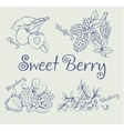 Set of blackberry strawberry blueberry cherry vector image vector image