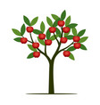 green summer tree with red apple vector image vector image