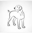 labrador dog on white background pet animals easy vector image vector image