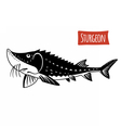 Sturgeon black and white vector image vector image