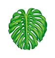Tropical Leave monstera isolate vector image vector image