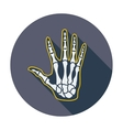 Anatomy hand vector image vector image