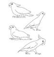 parrot cockatoo line 07 vector image