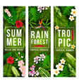 tropical palm leaf and exotic summer flower banner vector image vector image