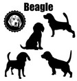 beagle dog silhouettevarious operation vector image vector image