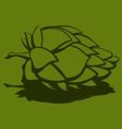 Hop flower Beer ingredient vector image vector image