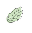 peppermint leaf plant and natural condiment vector image vector image