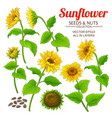sunflower set vector image