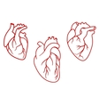 Human hearts icons in outline style vector image