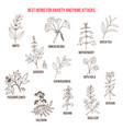 best natural herbs for anxiety and panic attacks vector image vector image