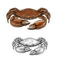 crab sea animal seafood shellfish sketch vector image vector image