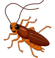 Cute Cockroach isolated on white background vector image