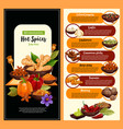 spice shop banner with condiment and seasoning vector image