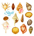 cartoon seashell and sea mollusk animals vector image