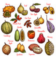 exotic fruits and tropical berries vector image vector image