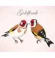 Pair of goldfinches vector image vector image