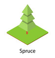 spruce tree icon isometric style vector image vector image