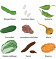 set of different vegetables vector image