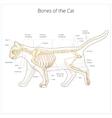 Cat skeleton veterinary vector image