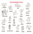best natural herbs for parkinson disease vector image vector image