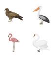 kite pelican flamingo swan birds set vector image
