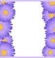 purple aster daisy flower border vector image vector image