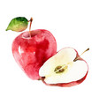 watercolor apples on white background vector image vector image