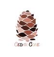 cedar cone sketch for your design vector image vector image