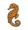 sea horse animal line art sketch vector image