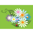 ladybird on flowers vector image vector image