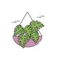 monstera plants in wall pot flat fill vector image vector image