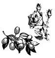 black ink drawing vector image vector image