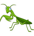 cartoon green mantis vector image vector image