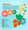 dog rose concept infographics vector image vector image