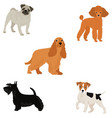 small dogs 5 dogs vector image