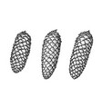 spruce cone set hand drawn sketch in engraving vector image