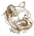 engraving of cat head vector image vector image