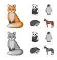fox panda hedgehog penguin and other animals vector image vector image