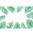 palm leaves background with copy space on white vector image
