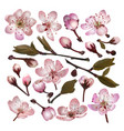 set of blossoming sakura pink flowers vector image