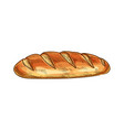 wheat bread loaf sketch icon vector image
