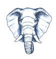 elephant head sketch wild animal vector image