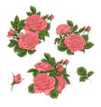 set coral roses hand drawing vector image