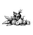 vegetables black ink drawing vector image