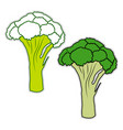 fresh broccoli on white background vector image vector image