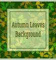 background oak leaves vector image vector image