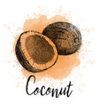 coconut in hand drawn graphics vector image vector image